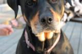 Pet adoption photo gallery