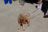 Heartwarming 'tails' at charity pet walkathon