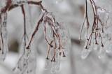 "Student photography of the ""Icepocalypse"""