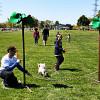 ARFmazing Race held at Spencer Smith Park