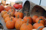 LIVE COVERAGE: Halton Pumpkin Trail