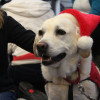 Puppy room helps students de-stress before holidays