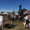Woofstock takes over the waterfront