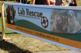 Labrapalooza takes over Kingsford Park