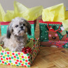 Holiday Pet Gifting