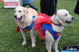Mutts and Monsters Walk-A-Thon