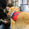 Paws Your Stress: pups share love with students