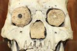 Toronto SkullStore features over 100 species