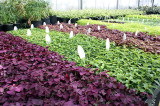 Thinking spring at Oakville Greenhouse