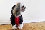 The do's and don'ts of dressing dogs