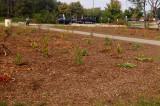 Volunteers needed to help wildflower garden grow