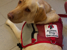 Jade is an autism service dog who visited Sheridan last Tuesday to promote knowledge and understanding of the autism-Asperger's spectrum.