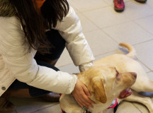 A student plays with Jade, and autism guide dog