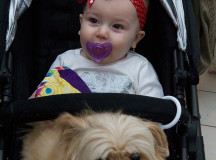 Stevie Malvern, 10 months, waits in line with her.  parents Allie and Brad and their five-year-old pom-a-poo Muffin to see Santa  Paws with claus – Shappert1a: Lee and Nancy Young accompany their 1-year-old baby Kaylin and two Rottweilers, Dozer and Willy, 8 and 10, to see Santa.