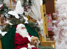Kringle gets a picture with Santa. Her owner Alan Major just loves Christmas and named her after it.