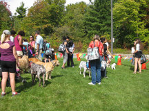 Dogs and their masters gather for the 'Best' contests