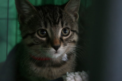 Kitten hoping to get a forever home.