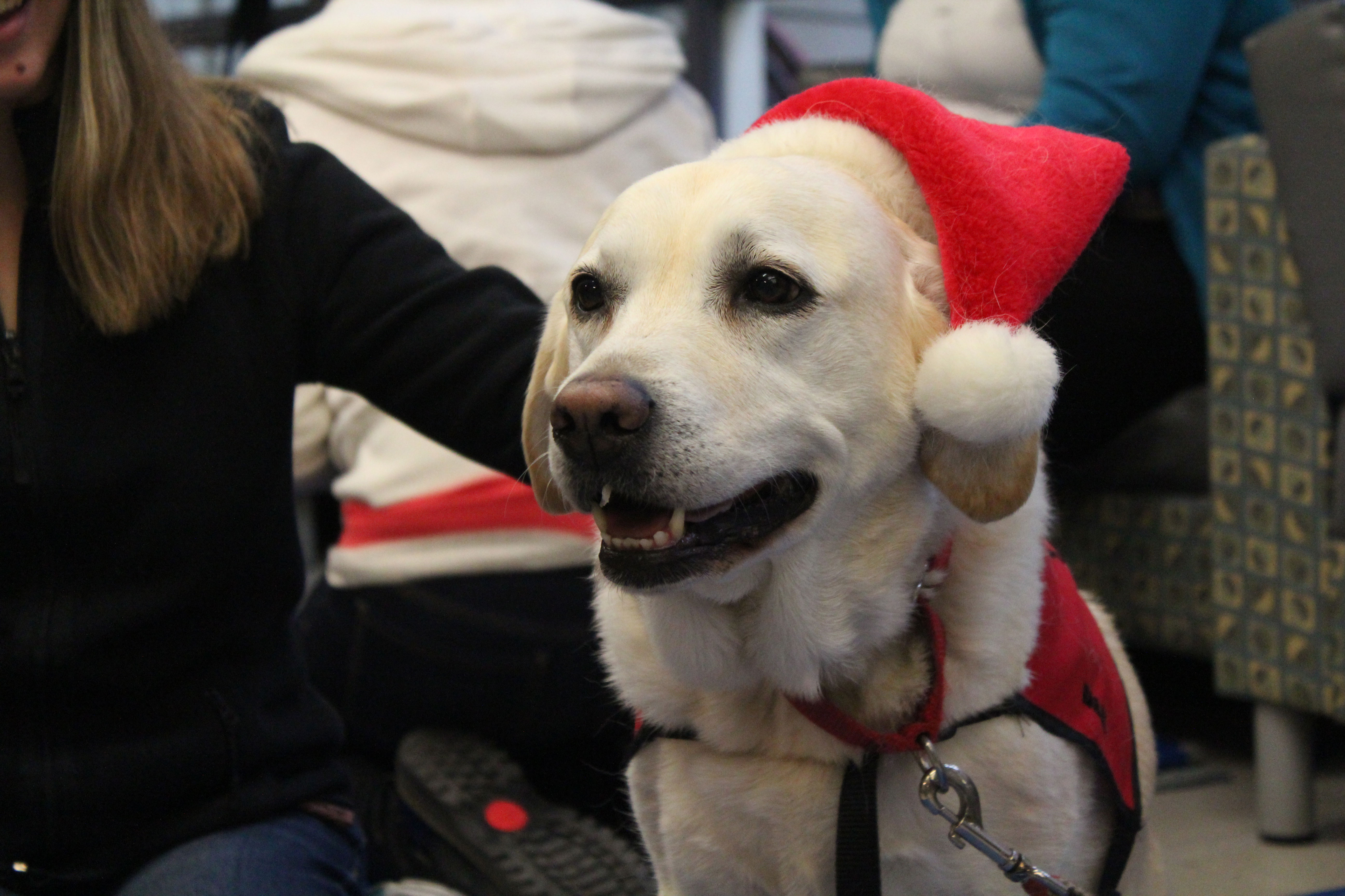 Bailey,8, is a therapy dog that visited the Sheridan Trafalgar Campus to help relax students during exam time.