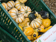 Gourds were also on sale for the Thanksgiving and Halloween holidays.