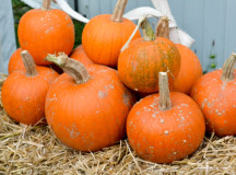 Pumpkins were on display around the Horticulture tents.