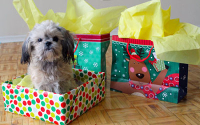 Holiday pet gifting. (Photography done by Nicole Calhau / Sheridan Sun)
