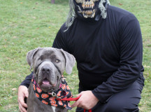 Rob Stevens and his dog Sophie are dressed in Halloween spirit.