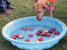 The furry and four-legged had an opportunity to bob for apples.