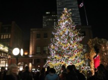 52-foot Norway spruce tree standing tall at The Christmas Market.