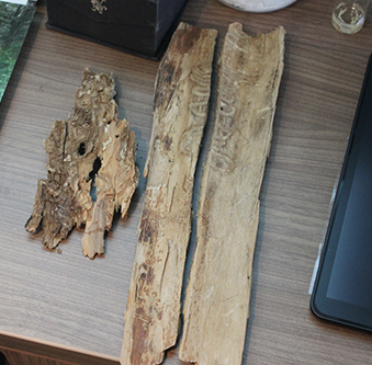 Samples from an ash tree affected by an ash borer. From left to right: The ash borer's point of entry, signified by the D shaped hole. The ash borer then tunnels downward and into the tree, before doing a J hook upward and back out.
