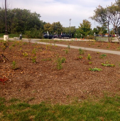 Wildflower garden located between Athletic Centre and A wing. (Photo by Olivia Pulham/